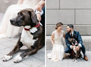dog at wedding - Olive Photography